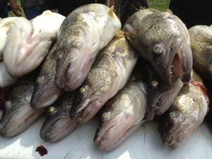 Put-in-Bay Fishing 4