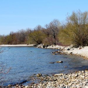 springtime on the shore at scheeff preserve