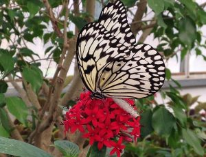 The Butterfly House at Put-in-Bay